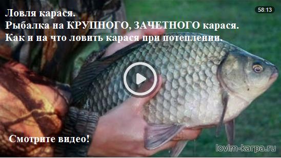 ловля карася на рыбхозе