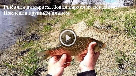 видео как клюет карась на поплавок