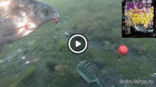 видео ловля карпа и амура весной