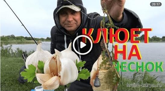 все о рыбалке бесплатно видео на карпа карася