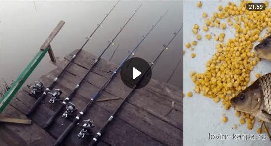 видео как ловить карпа на кукурузу видео