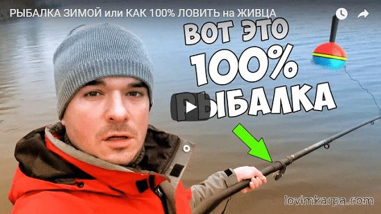живец для рыбалки новосибирск