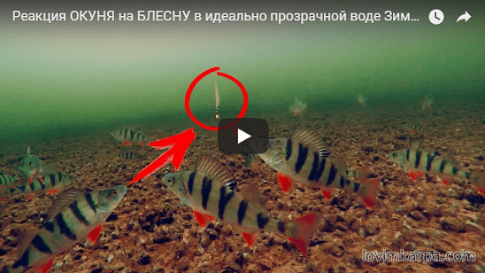 ловля судака на балансир подводная съемка