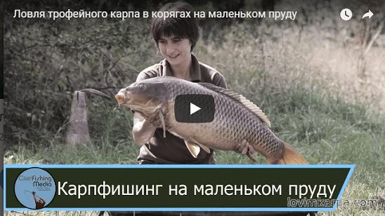 диалог о рыбалке снасти на карпа